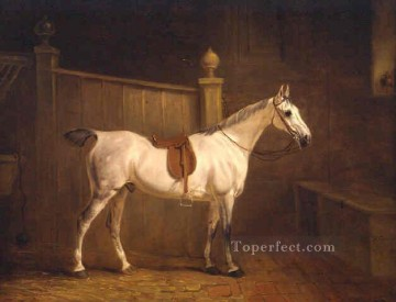 am091D animal horse Oil Paintings