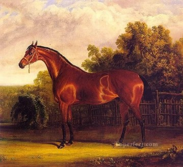 amc0018D1 animal horse Oil Paintings