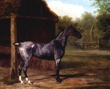dw019fD11 animal horses Oil Paintings