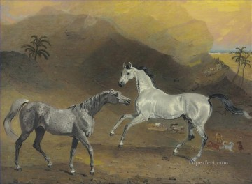 wild horses playing in mountain animals Oil Paintings