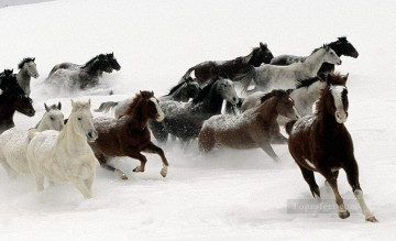 horse racing Painting - running horses on snow