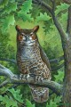 great horned owl animals