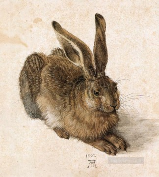 A Young Hare Albrecht Durer Oil Paintings