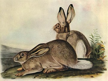 White Tailed hare Oil Paintings