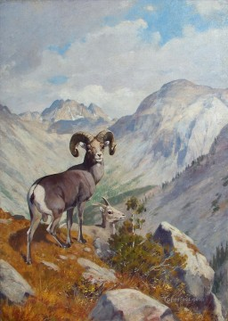 动物绘画 - rungius bighorn and 山峰 goat