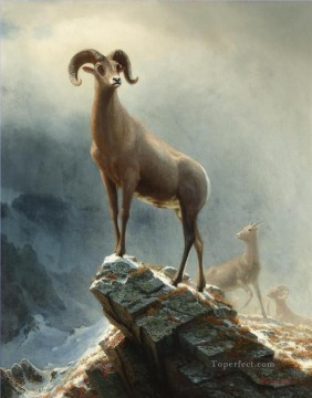 Rocky Mountain Big Horn Sheep American Albert Bierstadt animal Oil Paintings