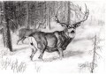 deer pencil drawing black and white