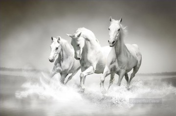 horse racing Painting - white horses running black and white