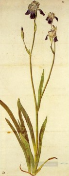 Classical Flowers Painting - Iris Albrecht Durer classical flowers
