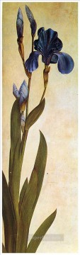 Iris Troiana Albrecht Durer classical flowers Oil Paintings