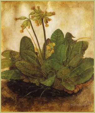 Primula Albrecht Durer classical flowers Oil Paintings
