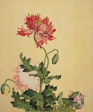 Lang shining poppy old China ink Giuseppe Castiglione floral decoration Oil Paintings