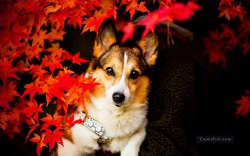 Dog behind Red Maple Leaves Painting from Photos to Art Oil Paintings