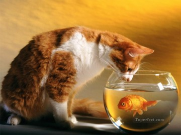 Kitten Goldfish Painting from Photos to Art Oil Paintings