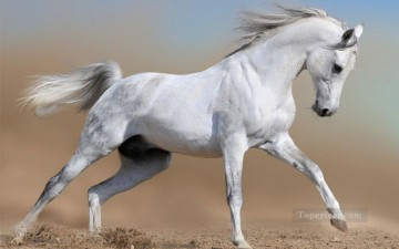 fighting horse grey realistic from photo Oil Paintings