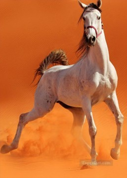 horse racing Painting - wild horse in desert realistic from photo