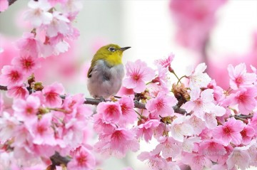 Bird in Cherry Blossom Spring Painting from Photos to Art Oil Paintings