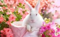 Springtime Bunny in Pink Flowers Painting from Photos to Art