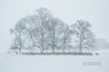 realistic photography 09 winter landscape deer Oil Paintings
