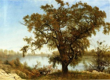 A View from Sacramento Albert Bierstadt Landscapes river Oil Paintings