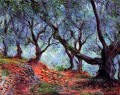 Grove of Olive Trees in Bordighera Claude Monet woods forest