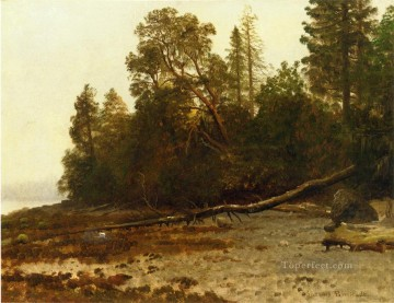 Woods Painting - The Fallen Tree Albert Bierstadt woods forest