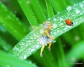 Fairy watching ladybug fairy original