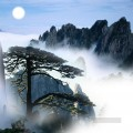 Chinese pine tree realistic original