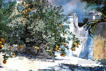 aka - Orange Tree Nassau aka Orange Trees and Gate Winslow Homer watercolor