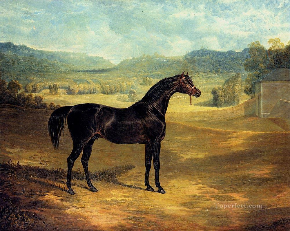 The bay Stallion Jack Spigot Herring Snr John Frederick horse Oil Paintings