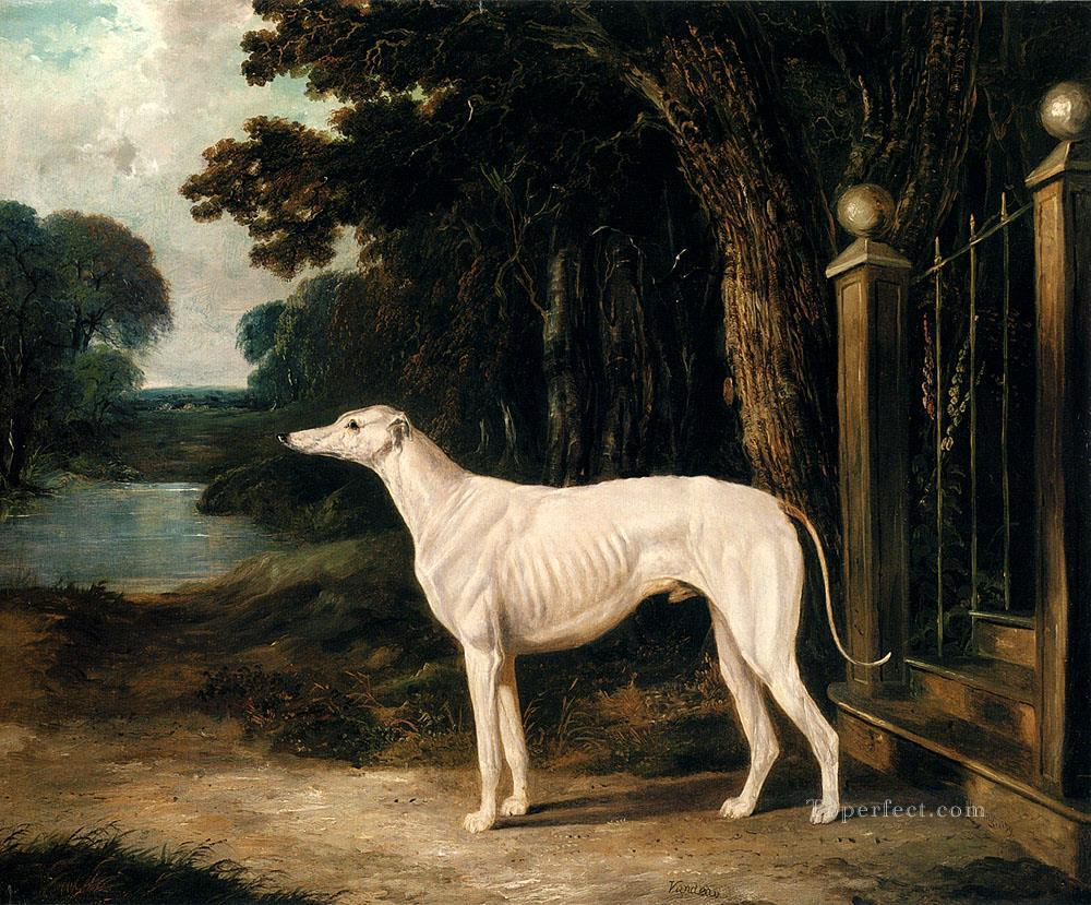 Vandeau A White Greyhound Herring Snr John Frederick horse Oil Paintings