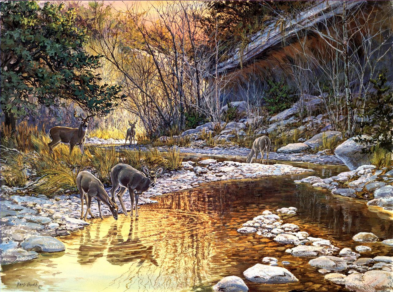whitetail drinking in stream Oil Paintings