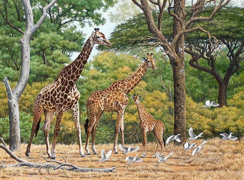 giraffe herd and birds Oil Paintings