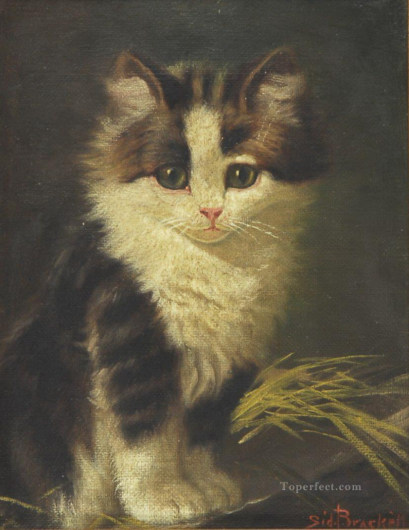 a cat baby Oil Paintings