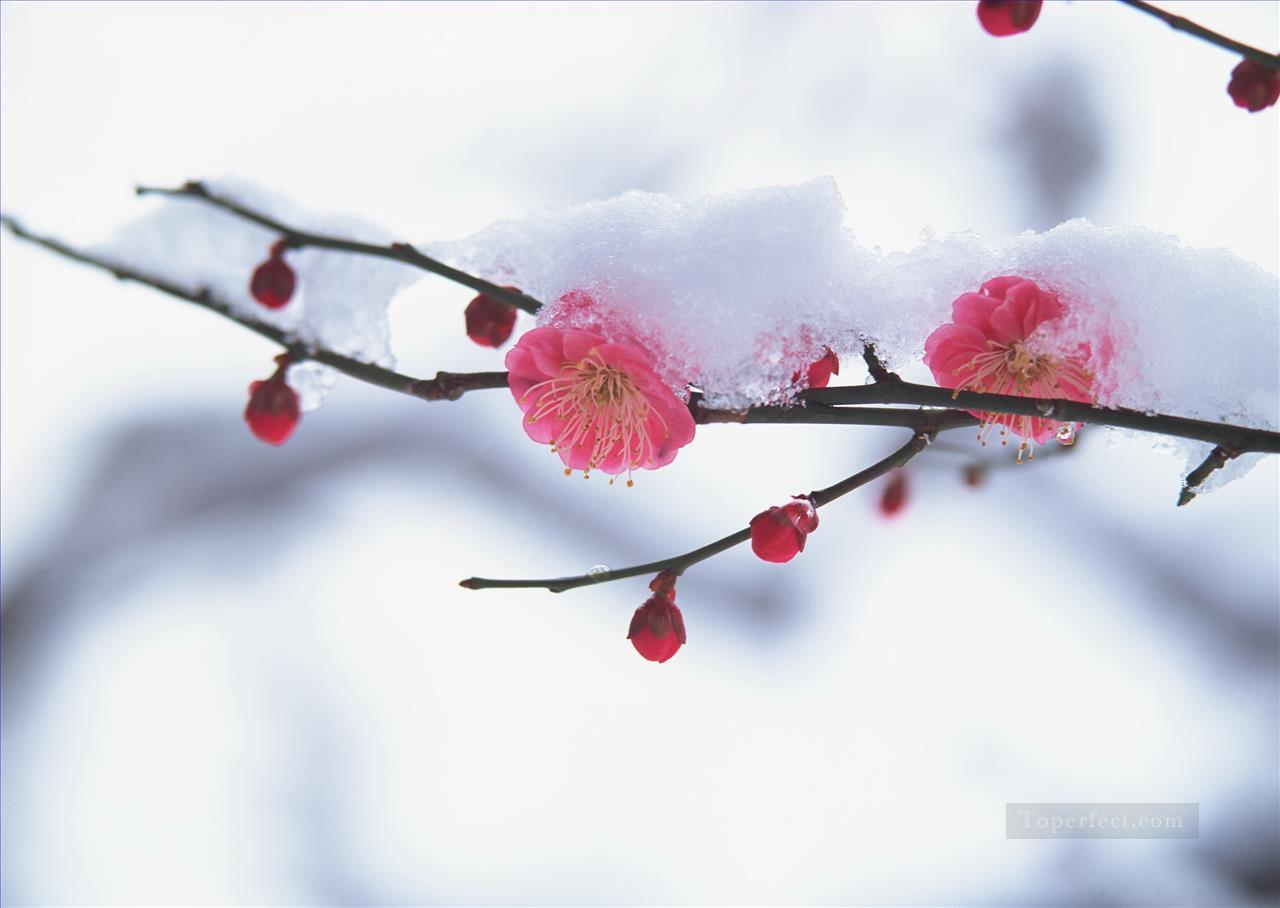 Pink Flowers Snow Painting from Photos to Art Oil Paintings