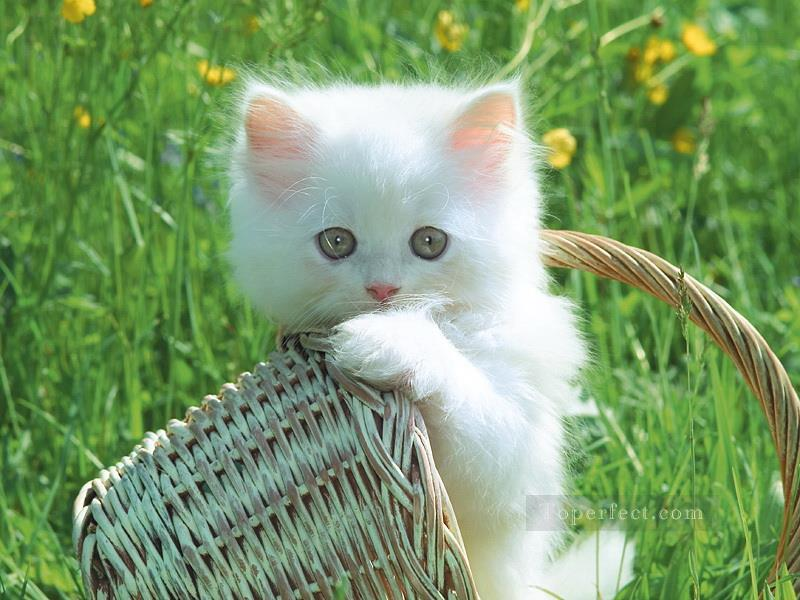 Cute Kitten Lawn Painting from Photos to Art Oil Paintings